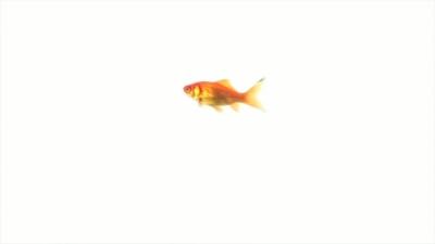 Small Goldfish