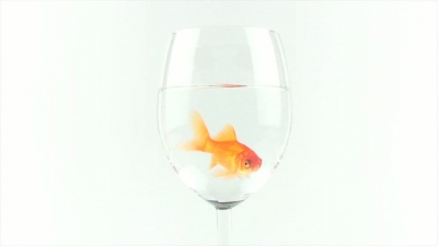 Wineglass With Fish